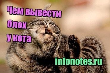 изображениеЧем вывести блох у кота в домашних условиях