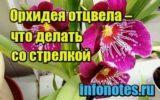 изображение Орхидея отцвела – что делать со стрелкой
