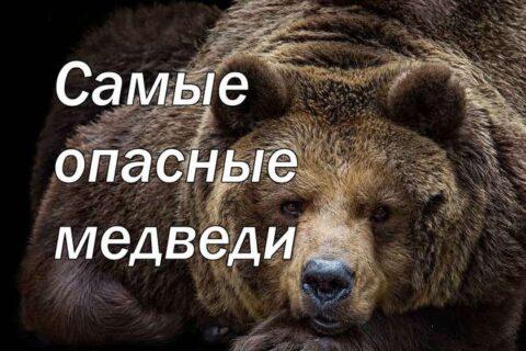 нападения медведей