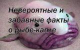 Невероятные и забавные факты о рыбе-капле