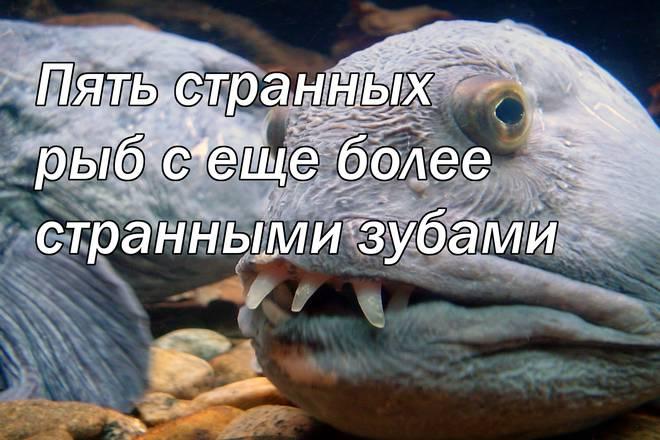 Пять странных рыб с еще более странными зубами