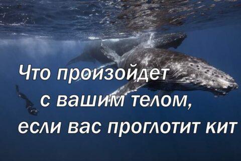 Что произойдет с вашим телом, если вас проглотит кит