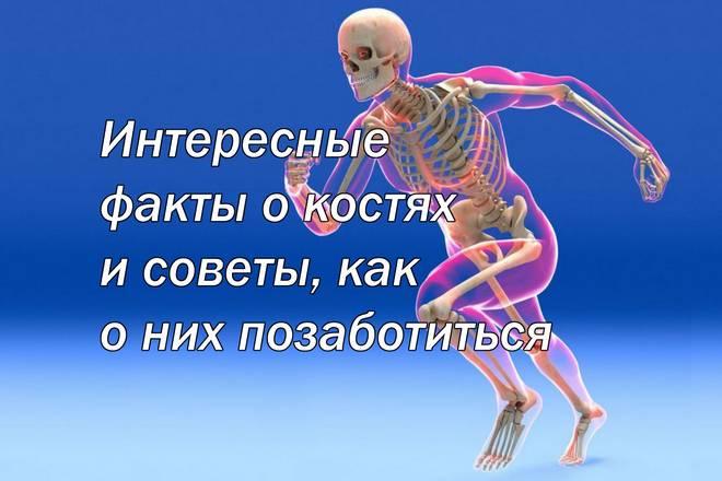 Интересные факты о костях и советы, как о них позаботиться