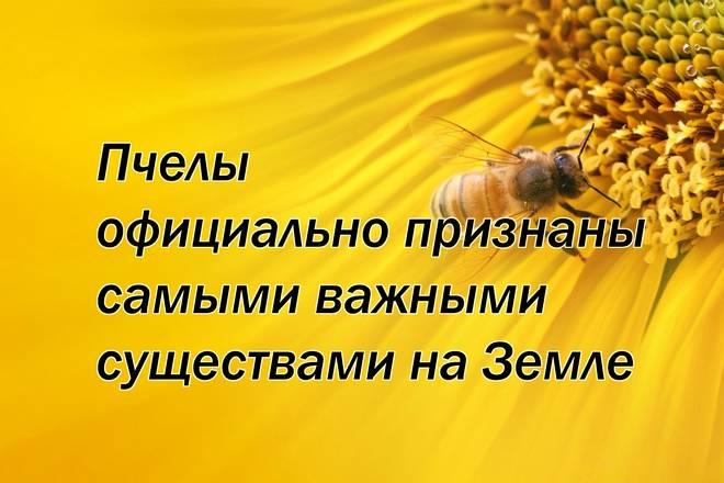 Пчелы официально признаны самыми важными существами на Земле